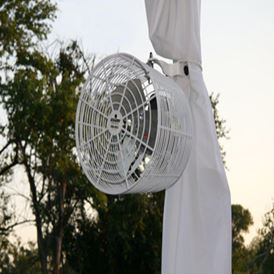 POLE FAN (WHITE)